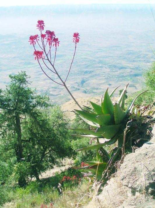 573ef424c8466_Ethiopia.jpg